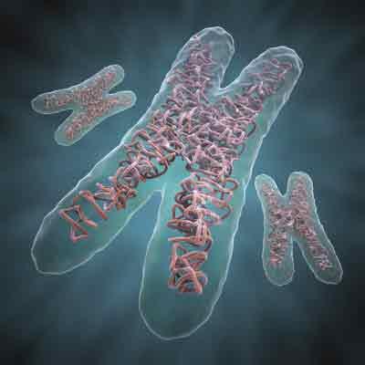 66144787chromosome-fr-jpg.jpg