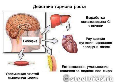 growth_of_hormone.jpg