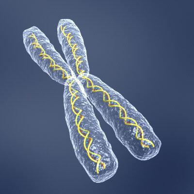 hromosoma.jpg